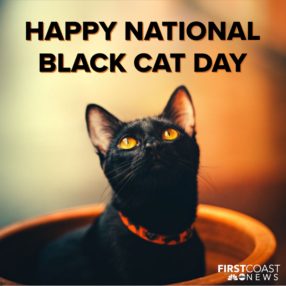 National Black Cat Day Wishes For Facebook