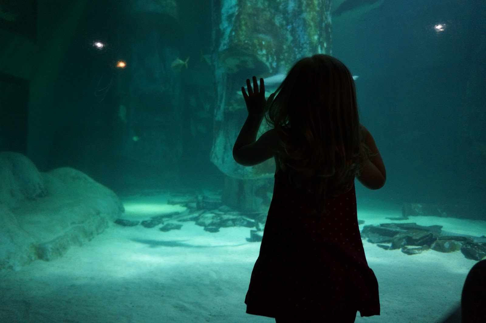 young girl next to london aquarium shark tank