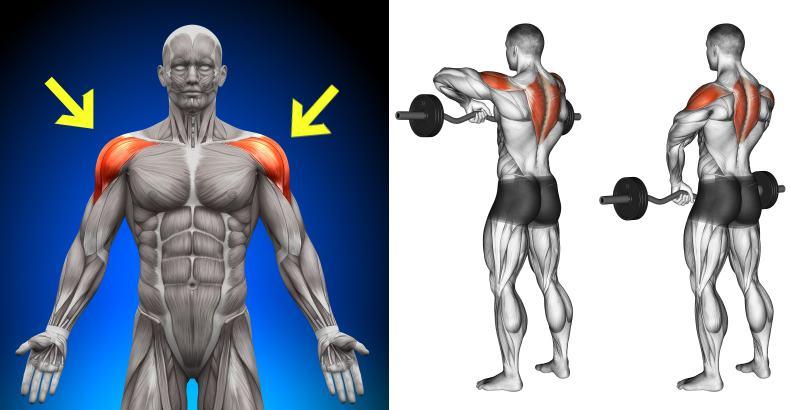 Shoulder Raises Related Keywords & Suggestions - Shoulder Ra