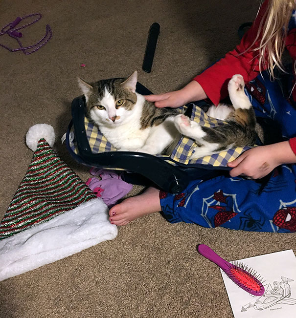1. Daughter strapped cat in baby doll car seat