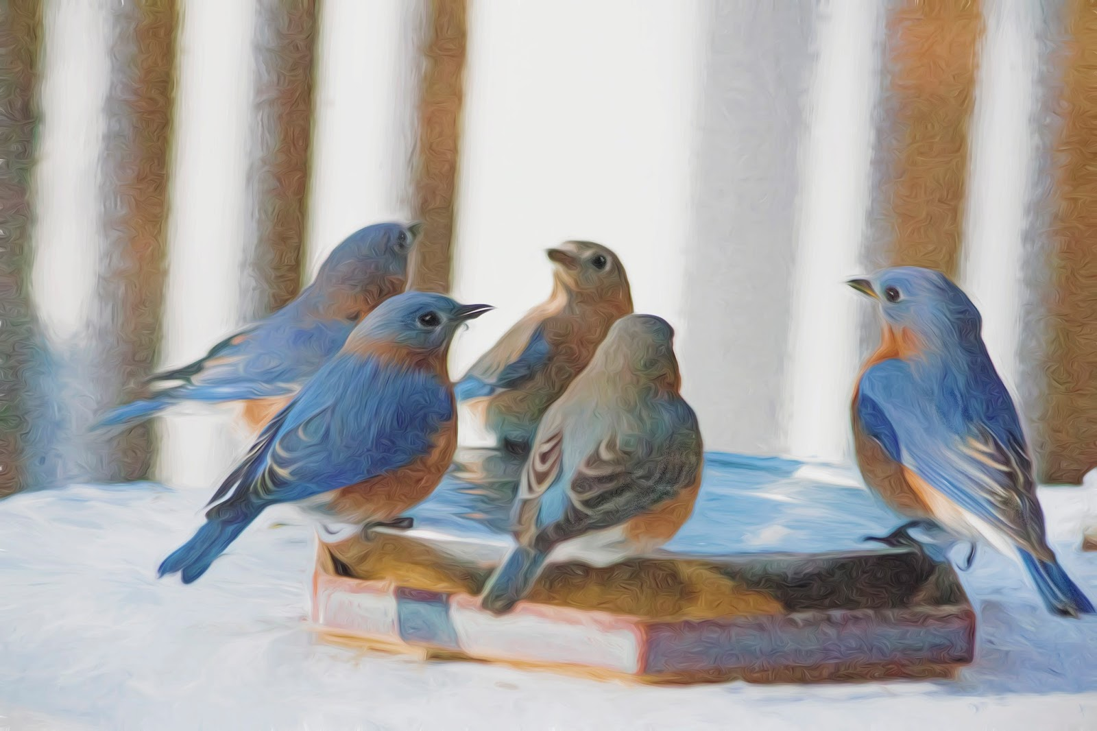 Bluebird Tea Room Clacton Groupon