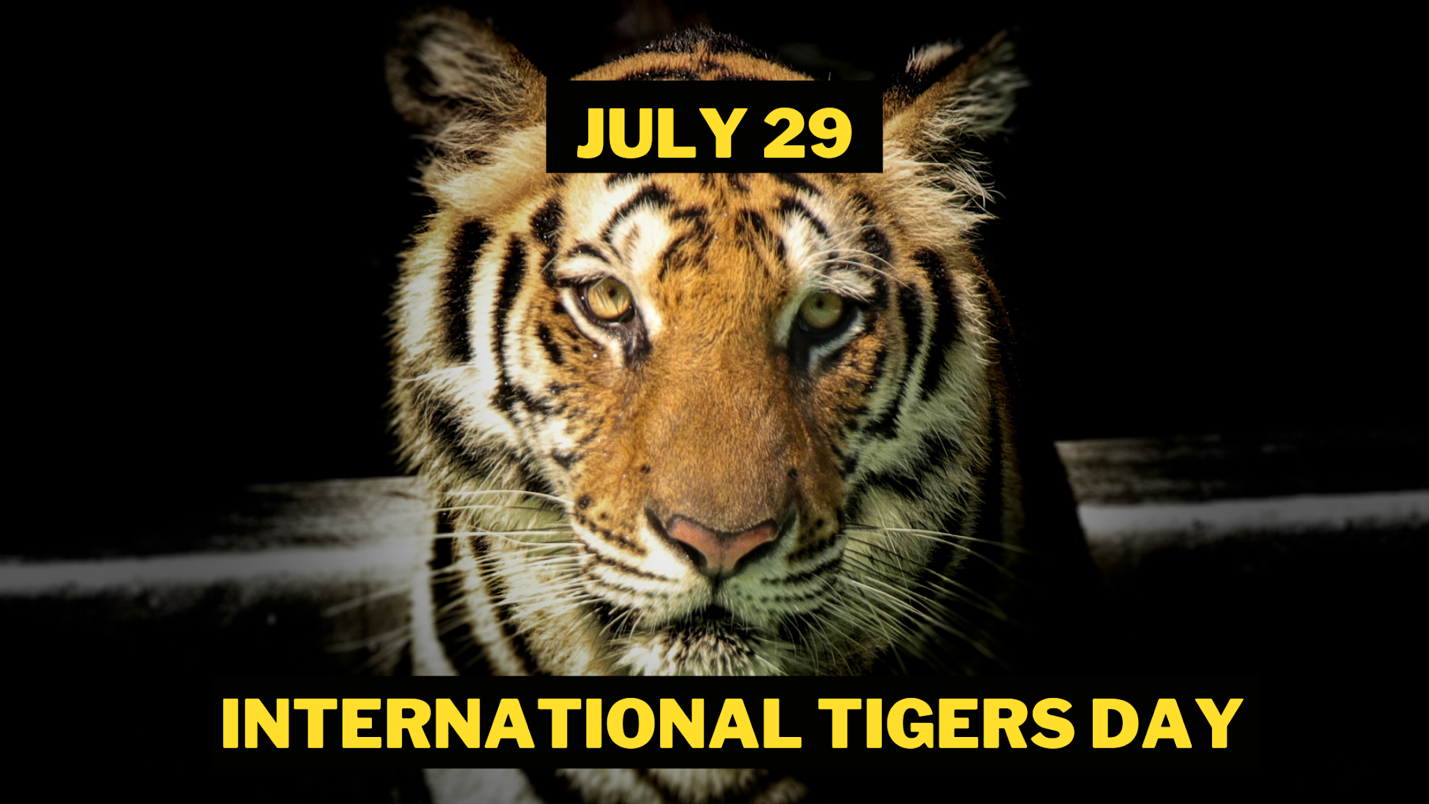International Tigers Day Images save tigers