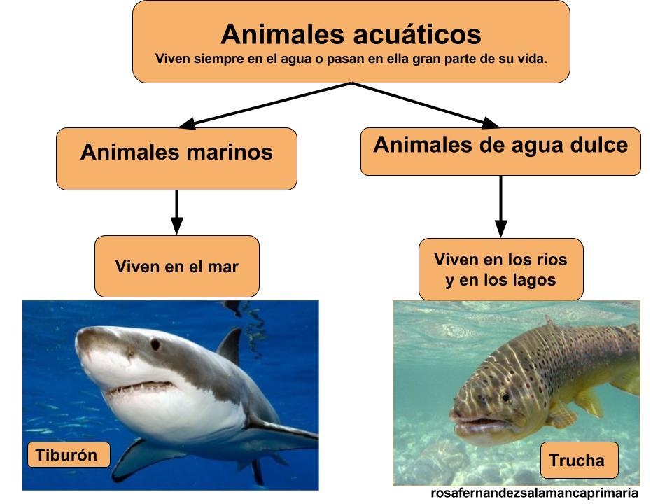 Worksheet. Maestra de Primaria Los animales y las plantas en la naturaleza