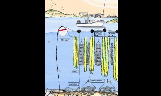 Model Pertanian Laut