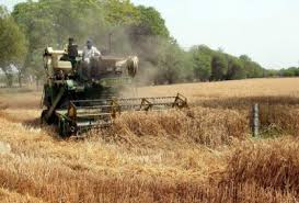 Harvesting update of of wheat, pulses, sugar cane, potato and onion in India.