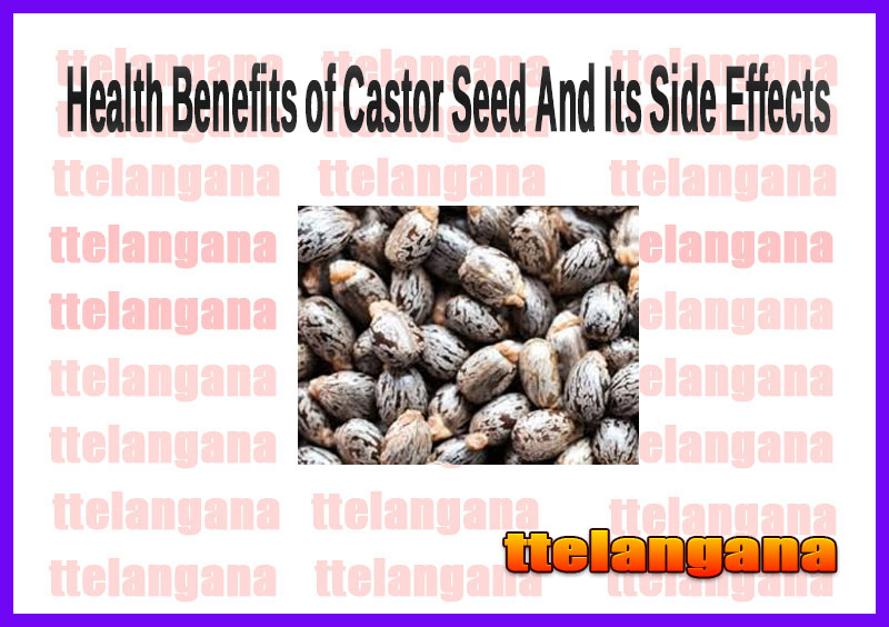 Health Benefits of Castor Seed And Its Side Effects