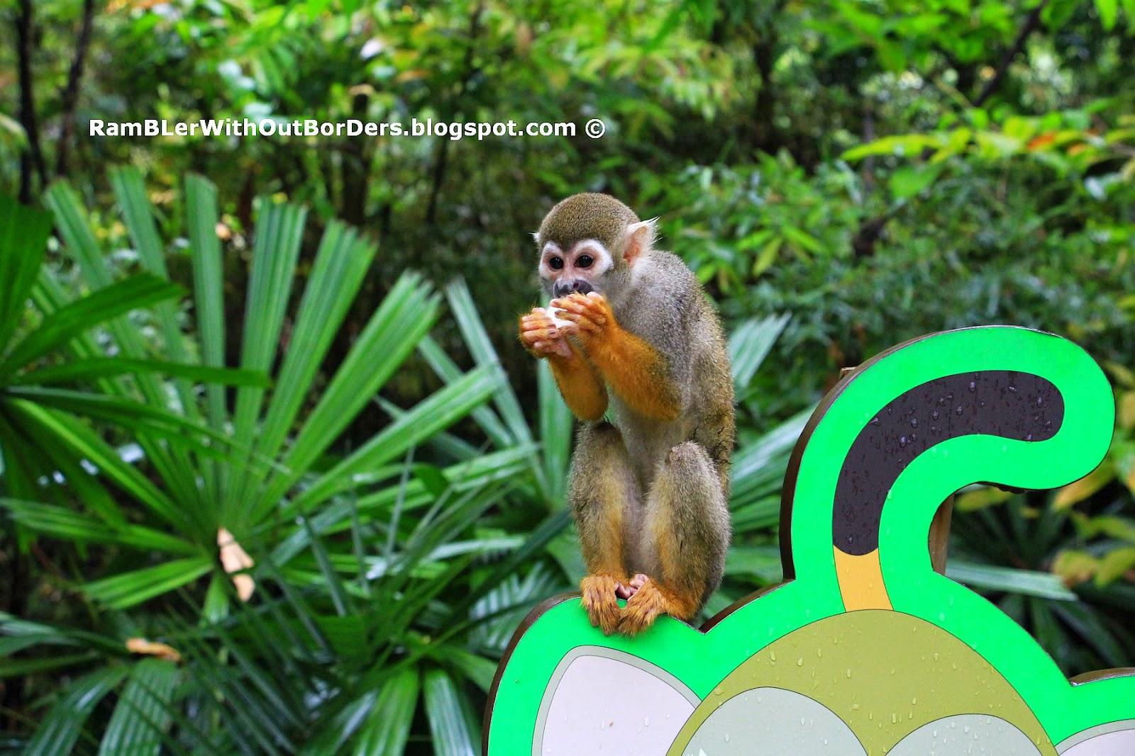 Squirrel Monkey, River Safari, Singapore