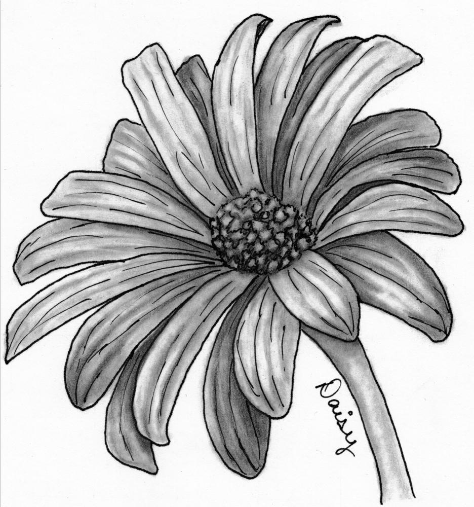 Artwork By Deanna: Sunday Sketches - Daisy