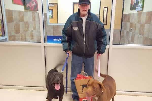 Expert Sheds His Pets After A Cardiovascular Disease, Pleads For Them To Be Returned