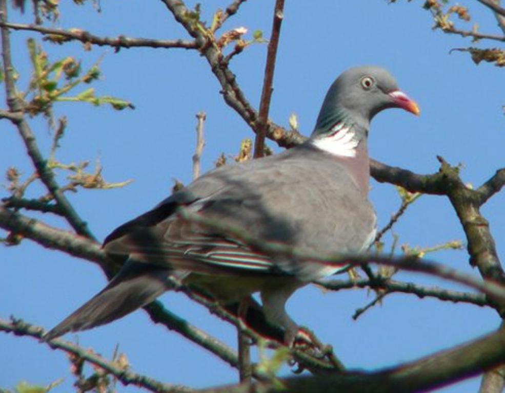 Emidio civitillo cusano mutri bn il fascino della - Primavera uccelli primavera colorazione pagine ...