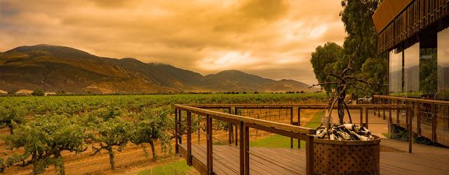 Valle Guadalupe Baja California