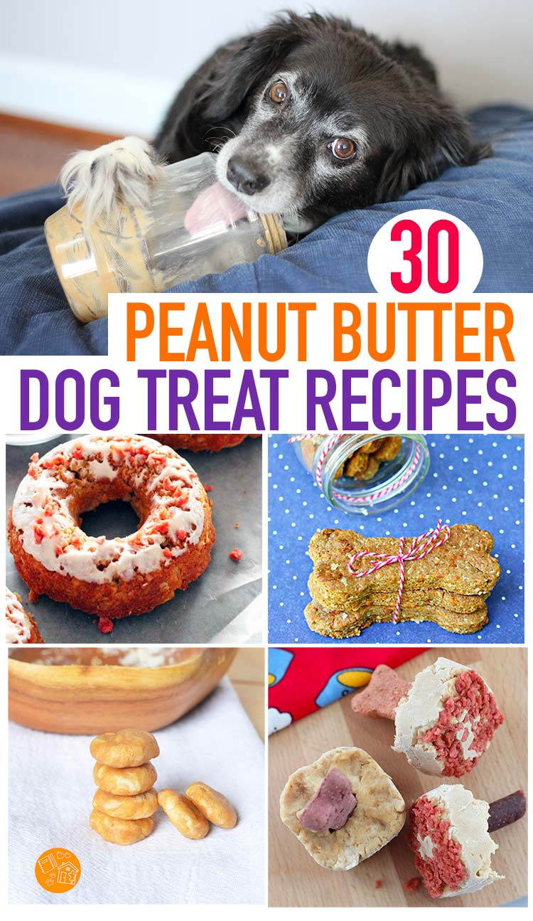 Easy dog treats made with peanut butter! Get 30 homemade dog treat recipes that your peanut butter fan will go crazy for. Everything from homemade dog cookies to frozen dog treats. Even peanut butter doggie cupcakes and dog donuts! #dogtreats #dogs #homemade #recipes
