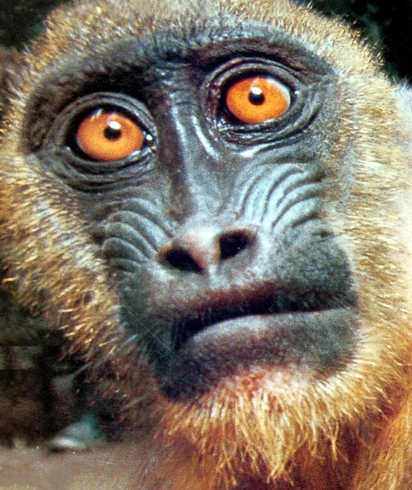 hilarious monkeys - photo #20