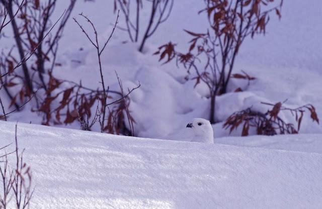 Snag, Yukon, Canada