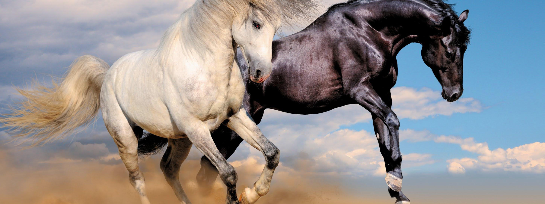 صورة احصنة