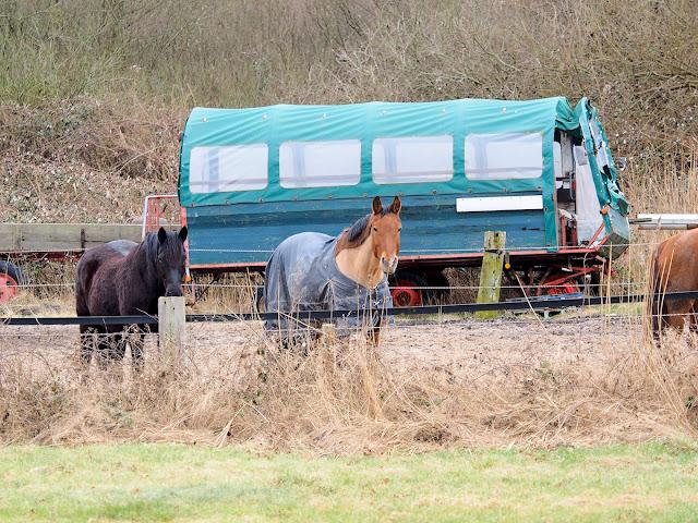 Langeoog, Kutsche, Pferde