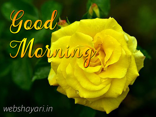 good morning wish image for new friend with yellow rose