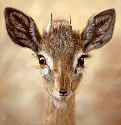 bébé antilope
