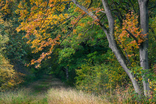 Monks Wood in Cambridgeshire in autumn