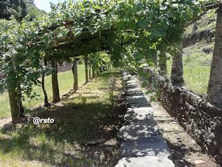 La via Francigena del Canavese