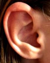 Oído - oreja