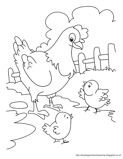 Gambar Mewarnai Ayam (2)