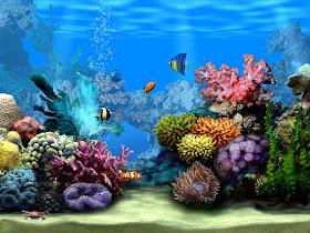 Living Marine Aquarium Screensavers