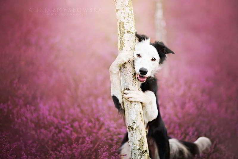 dog-photography-alicja-zmyslowska-09