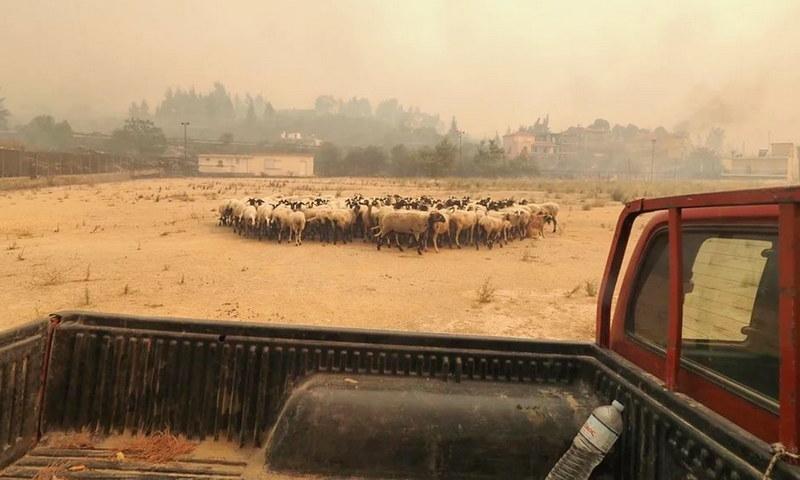Δήμος Αλεξανδρούπολης: Συγκέντρωση ζωοτροφών για τους πυρόπληκτους κτηνοτρόφους