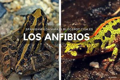 Animales que viven en el agua y en tierra