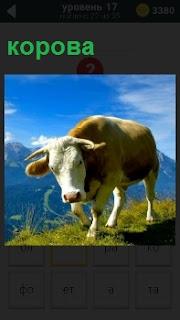 На берегу обрыва стоит обычная корова, склонив голову на бок на фоне голубого неба
