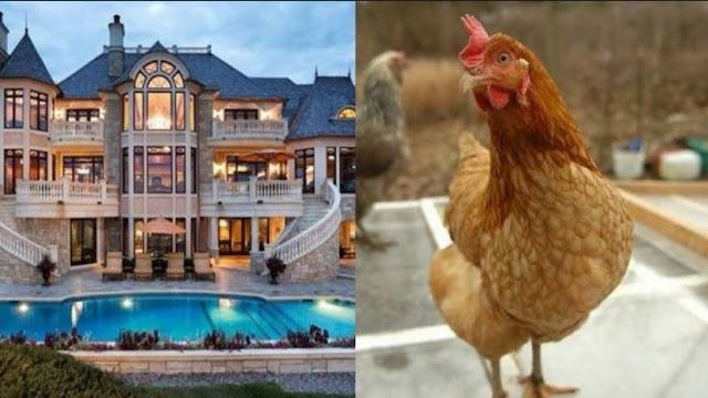 करोड़ों की मालकिन है ये मुर्गी, जी रही ऐश की ज़िन्दगी