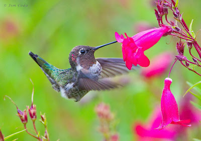 http://surgeyourprofits.blogspot.com/2013/10/googles-new-hummingbird-search.html