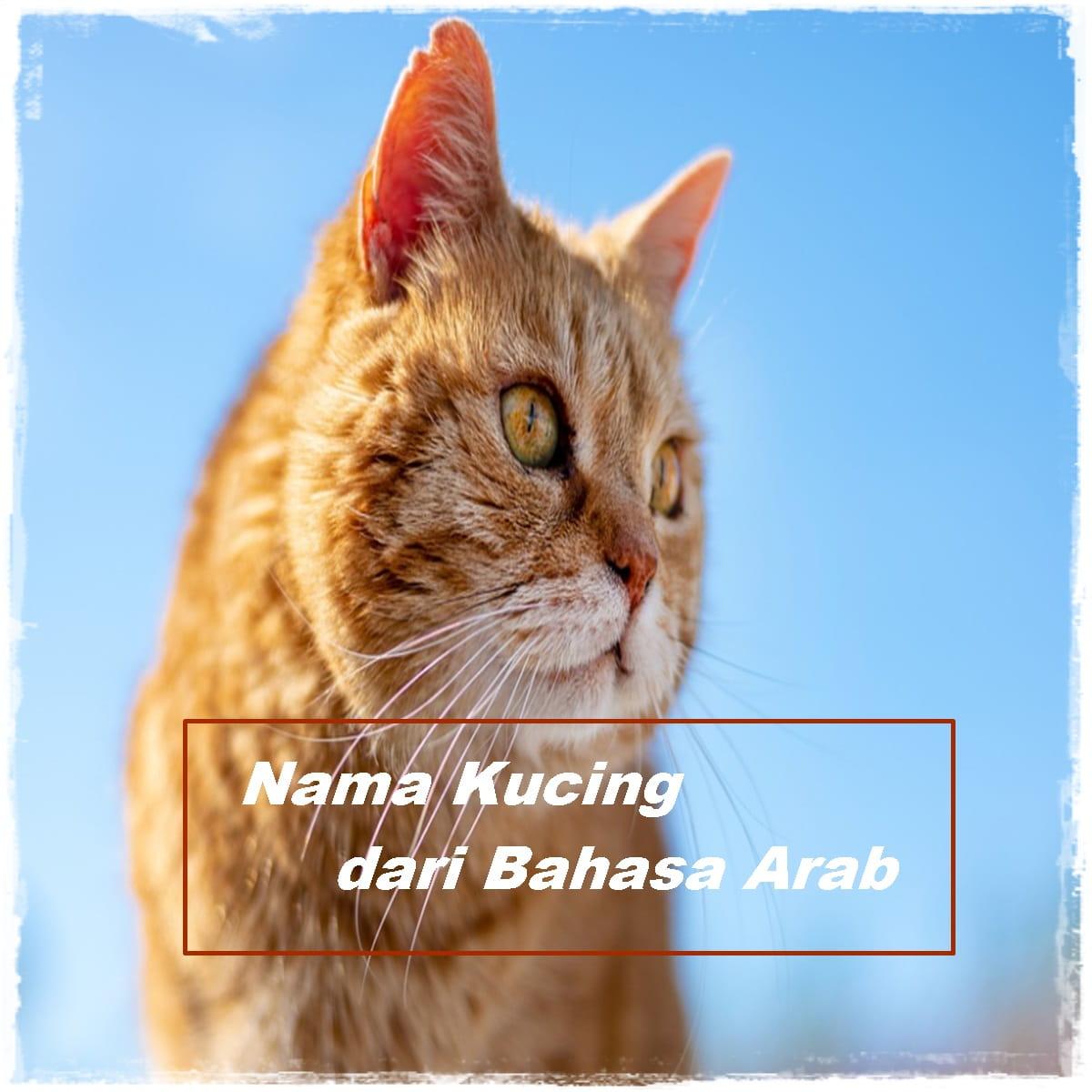 Nama Kucing Islam Bahasa Arab