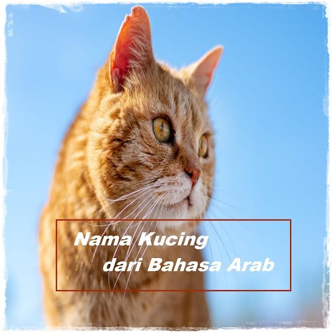 Nama Kucing Islami dari Bahasa Arab yang Paling Populer