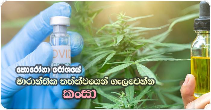 Cannabis as covid19 medicine