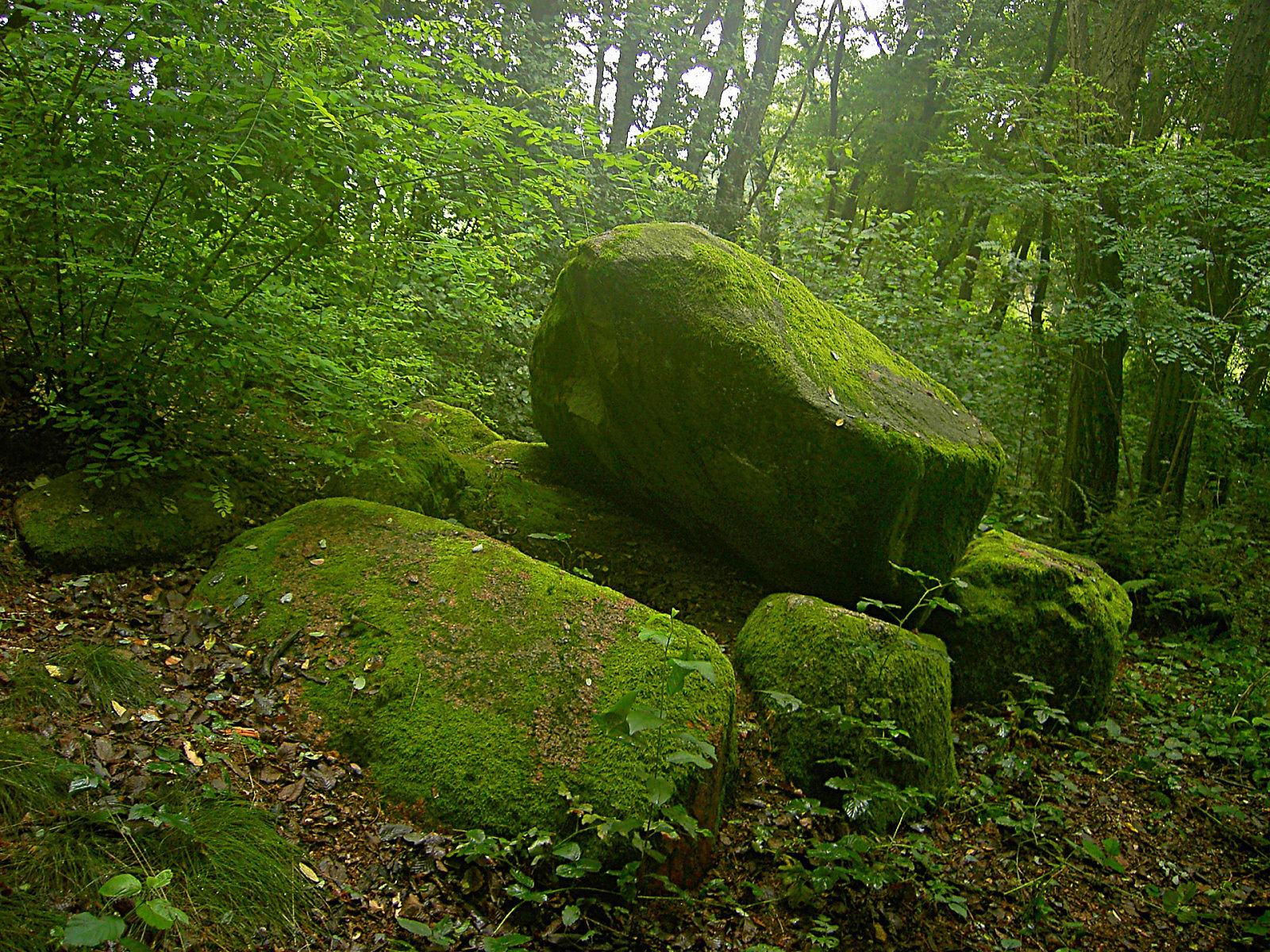 https://1.bp.blogspot.com/-LraSSyQtW6Y/TVQwe7E2biI/AAAAAAAAF-o/9Z9rZjDHqBE/s1600/HD+Wallpaper+greenery.jpg