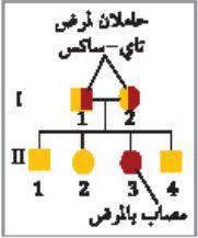 ملخص درس الأنماط الأساسية لوراثة الإنسان - الوراثة المعقدة والوراثة البشرية