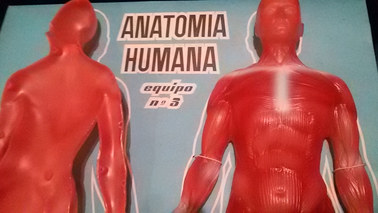 elcajondesinderik: ANATOMIA HUMANA de SERIMA