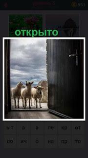 открытые двери сквозь которые хотят пройти несколько баранов