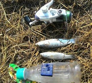 Rahasia cara Mancing Belanak dengan Menggunakan Botol