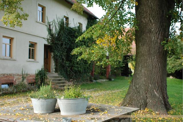 sylwoterapia, drzewo przy domu