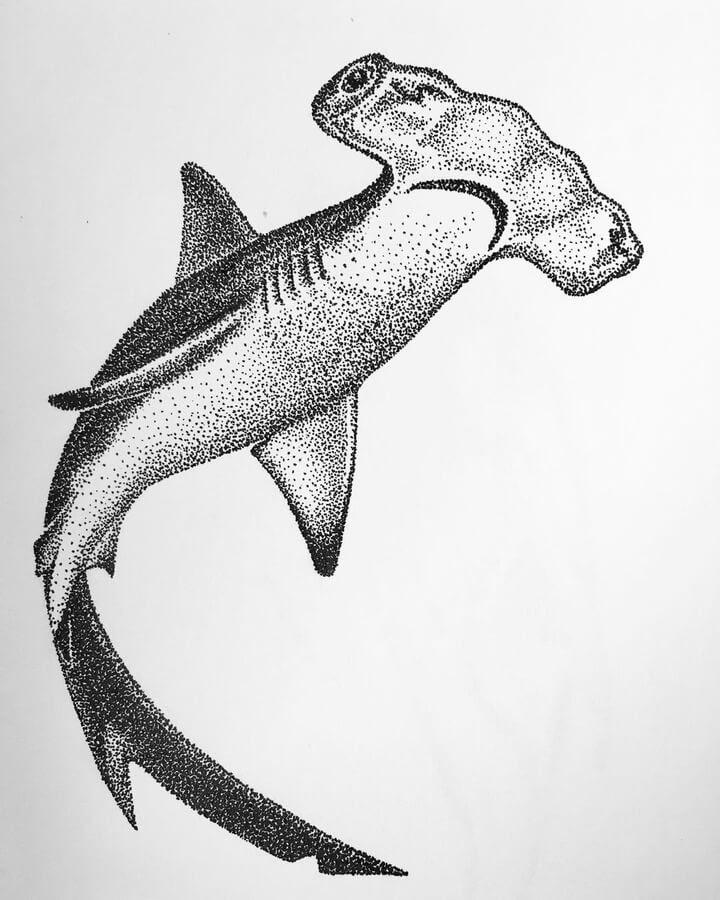 01-Hammerhead-shark-Maria-Lecanda-www-designstack-co