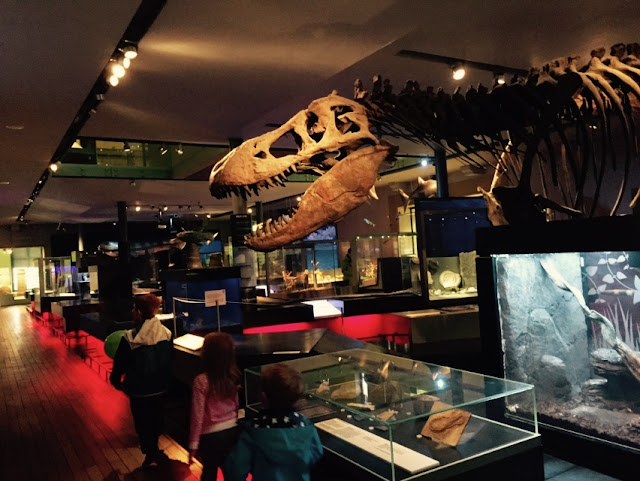 20+ UK Days Out for Kids who Love Dinosaurs   -  Great North Museum, Newcastle