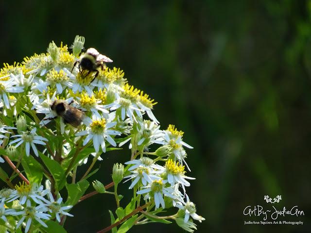 Newfoundland Bees