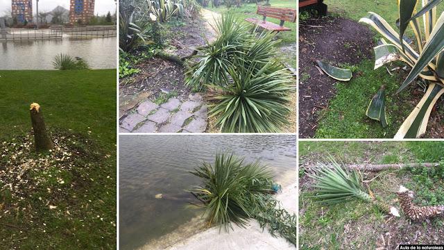 Destrozos en las plantas de jardín botánico