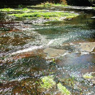 Águas Calmas do Rio Próximas à Represa, no Parque do Caracol