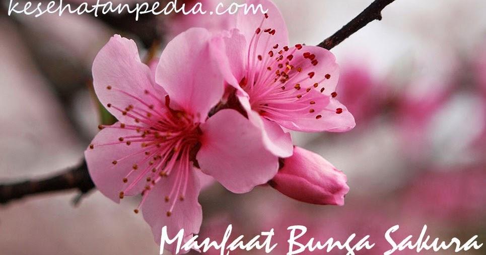 6 Manfaat Bunga Lawang untuk diet