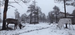 سيبيريا