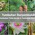 Tumbuhan Berpembuluh: Tumbuhan Tidak Berbiji & Tumbuhan Berbiji